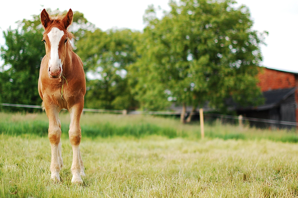 commercial equine liability